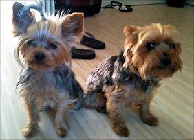 JJ and Bandit: Office Buddies