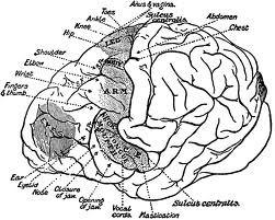 brain-neuro