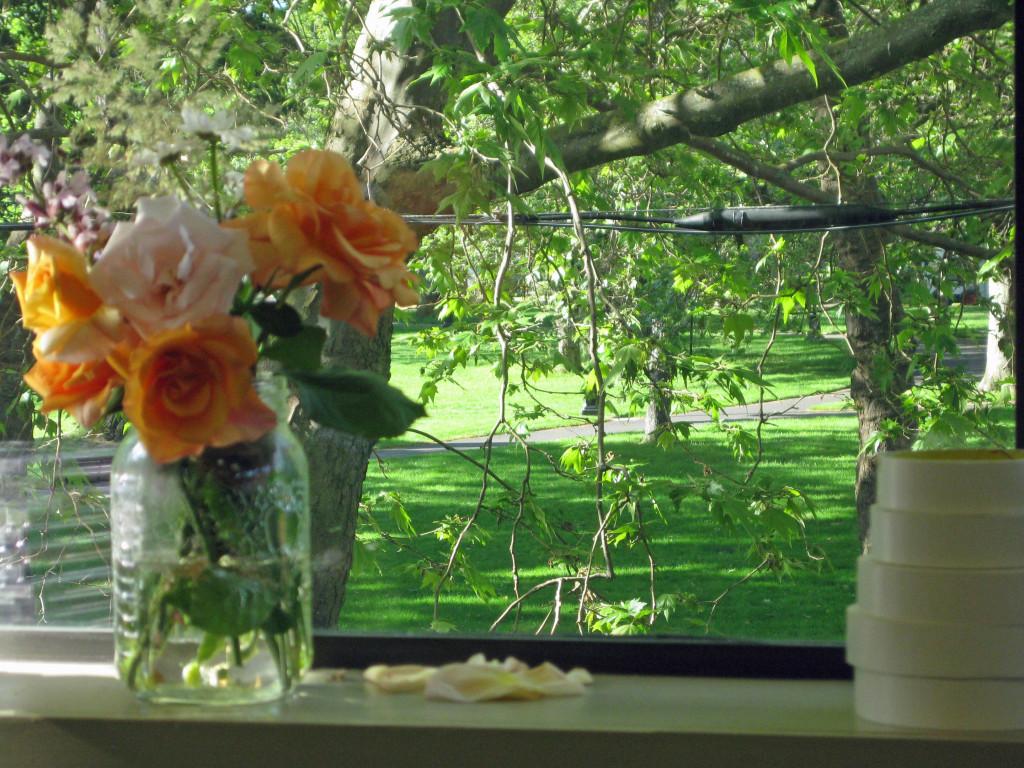 Roses From Alexa's Garden