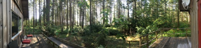 Forest Panorama from Hollyhock Cabin