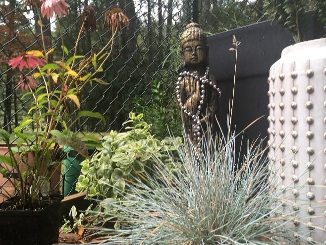 statue of Buddha in a metchosin garden